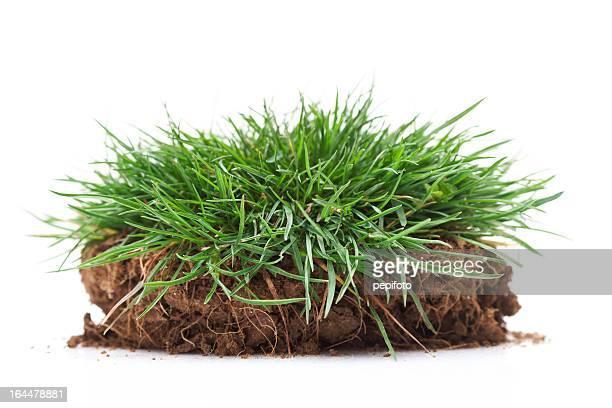 erba verde - territorio foto e immagini stock