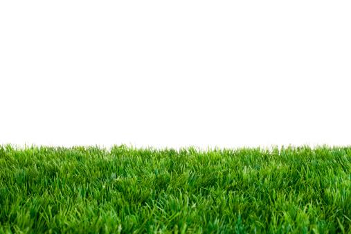 Green Grass 475802315