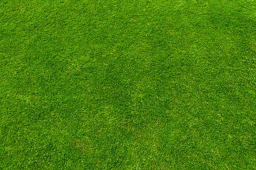 Green grass 480560906