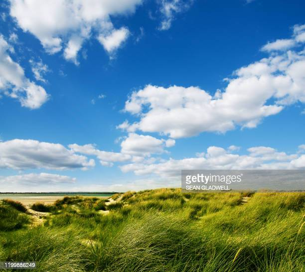 green grass sand dunes - heaven stock pictures, royalty-free photos & images