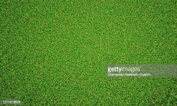 green grass texture background, green lawn, backyard for desktop picture, park lawn texture. - football bulge stock pictures, royalty-free photos & images