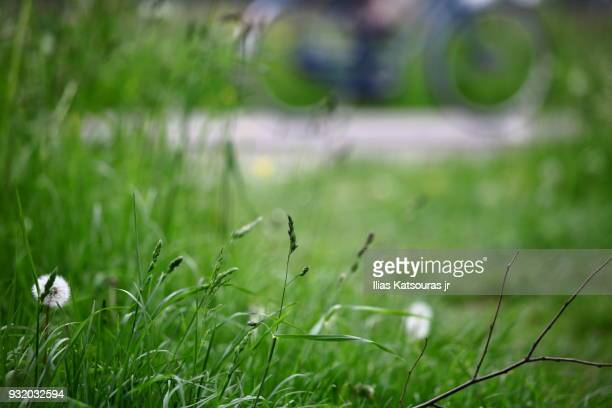Green grass with defocused bicycle in the background
