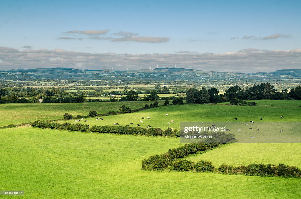 Green grass with trees : Stock Photo