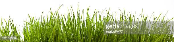 green grass xxxl - gras stock pictures, royalty-free photos & images