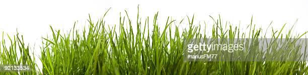 Green grass XXXL