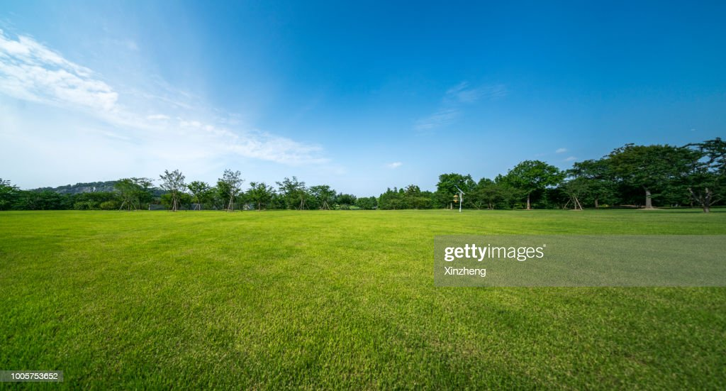 Green grassland and blue sky : Stock Photo