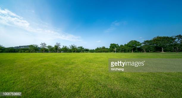 green grassland and blue sky - public park stock photos and pictures