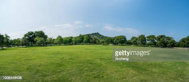 green grassland and blue sky - panoramic stock pictures, royalty-free photos & images