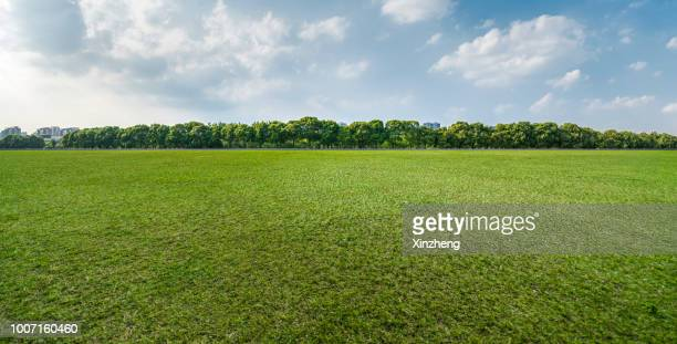green grassland and blue sky - wiese stock-fotos und bilder