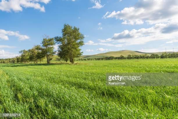 green grassland and blue sky - 草原 ストックフォトと画像