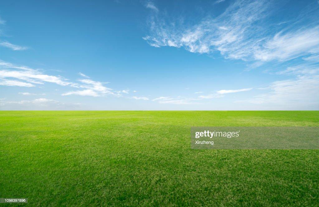 Green grassland and blue sky : Stock Photo