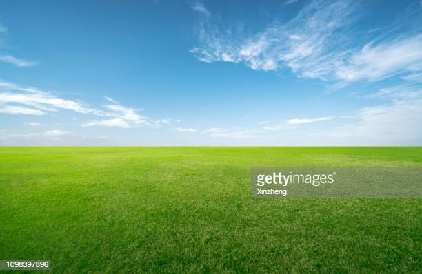 green grassland and blue sky - horizon over land stockfoto's en -beelden