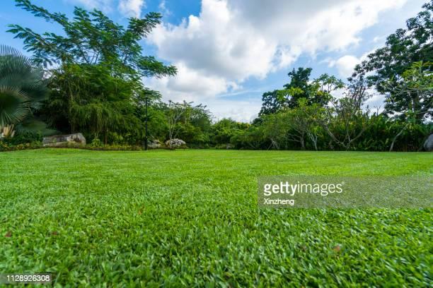 green grassland and blue sky - terreno coberto de grama - fotografias e filmes do acervo