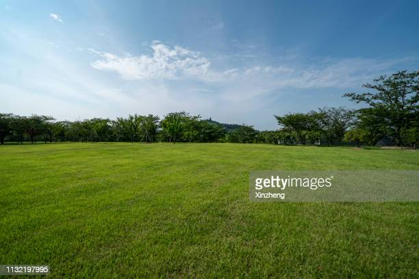 green grassland and blue sky - gras stock pictures, royalty-free photos & images