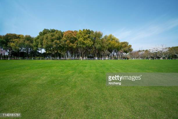 green grassland and blue sky - grove stock pictures, royalty-free photos & images