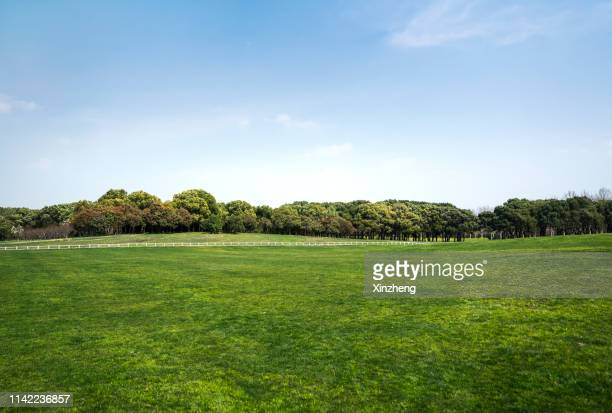 green grassland and blue sky - public park stock pictures, royalty-free photos & images