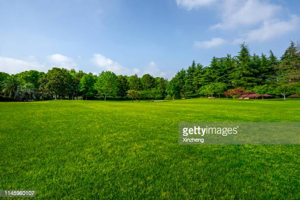 green grassland and blue sky - lawn stock pictures, royalty-free photos & images