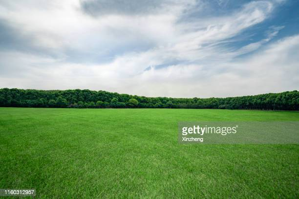 green grassland and blue sky - treelined stock pictures, royalty-free photos & images
