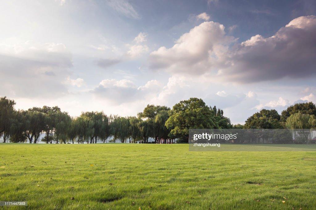 Green grassland and blue sky : Foto stock