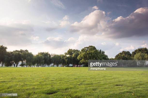 green grassland and blue sky - park stock-fotos und bilder