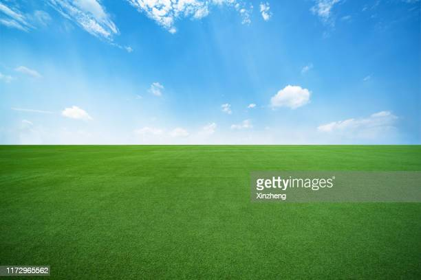 green grassland and blue sky - pasture stock pictures, royalty-free photos & images