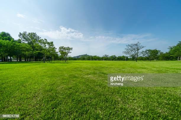 green grassland and blue sky - prato foto e immagini stock