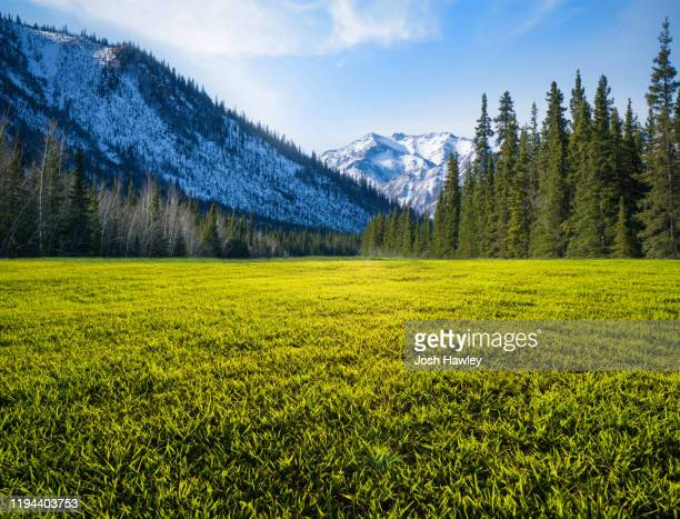 green grassland with snow mountain background - nature stock pictures, royalty-free photos & images
