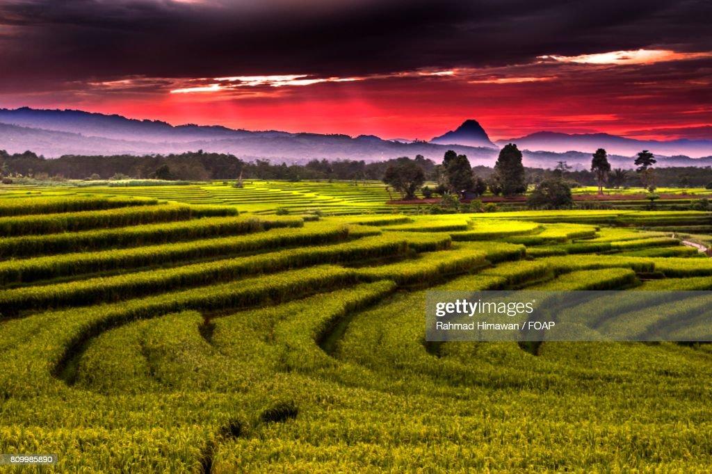 Green grassy land : Stock Photo