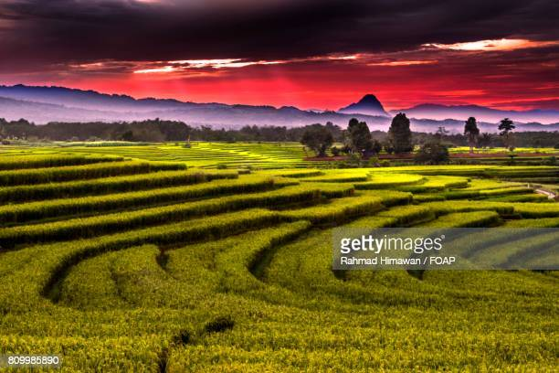 green grassy land - rahmad himawan stock photos and pictures