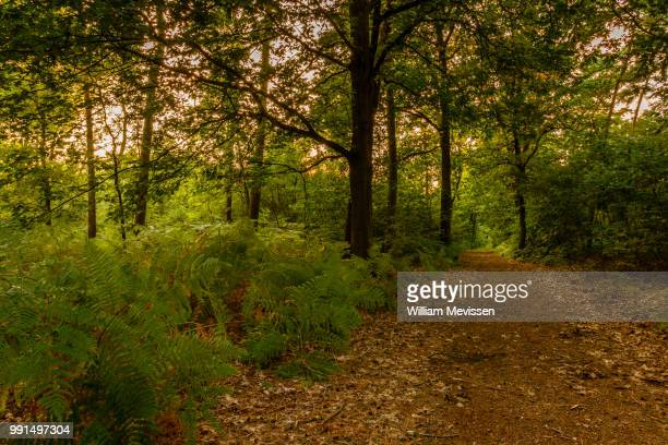 green, greener & greenest - william mevissen - fotografias e filmes do acervo