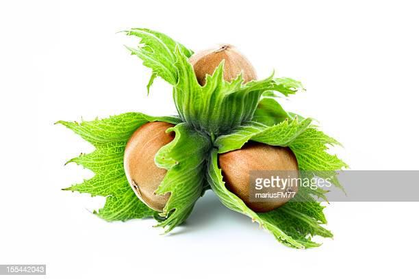 green Haselnuss-Nüsse