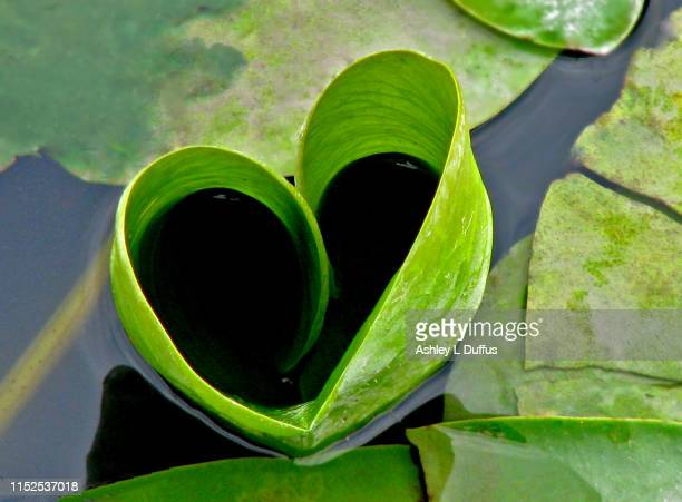 green heart - heart month stock photos and pictures