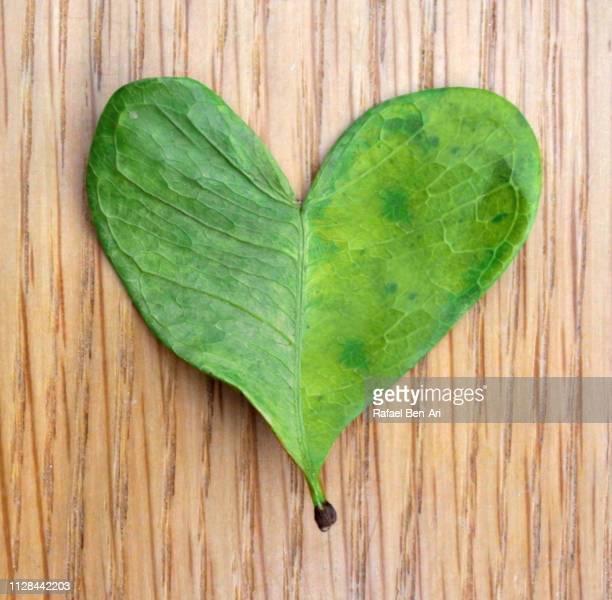 Green Heart Shaped Leaf