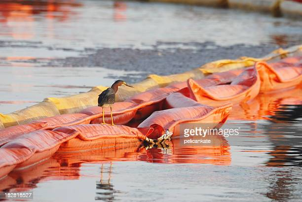 Green Heron Sitting on Oil Boom