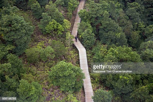 A Green Hike