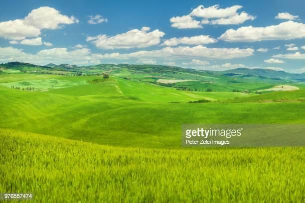green hills and wheat field in tuscany, italy - paesaggio collinare foto e immagini stock