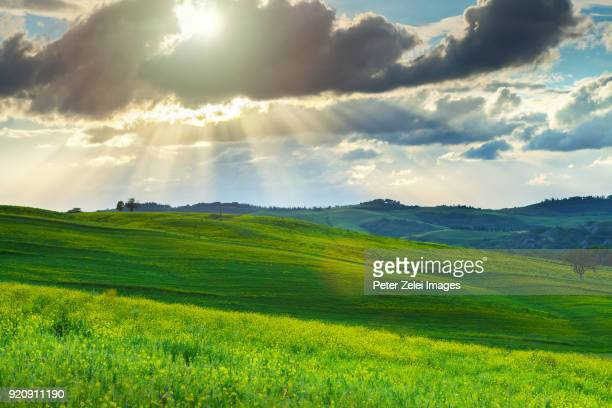 green hills in tuscany, italy - horizon over land stock pictures, royalty-free photos & images