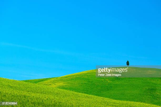 green hills in tuscany with a lonely tree - italian cypress stock pictures, royalty-free photos & images