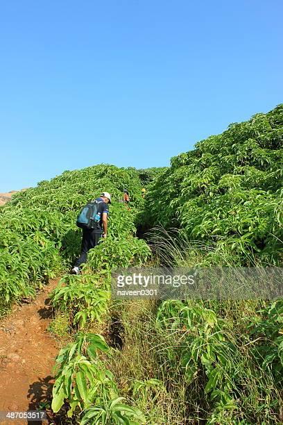 green hills - hügelkette stock-fotos und bilder
