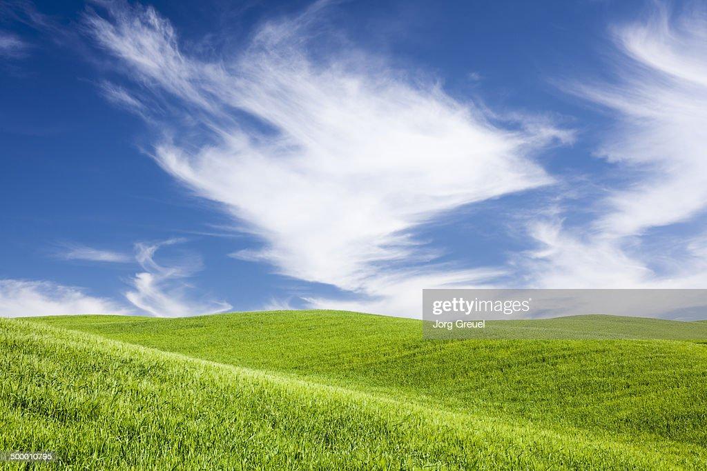 Green hills : Foto stock