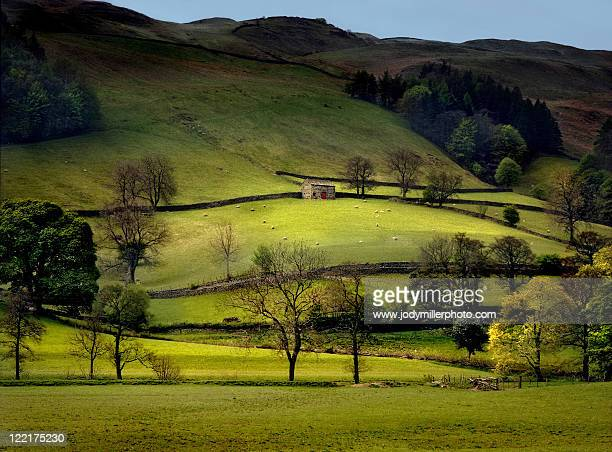 green hillsides and stone barns - york yorkshire stock pictures, royalty-free photos & images