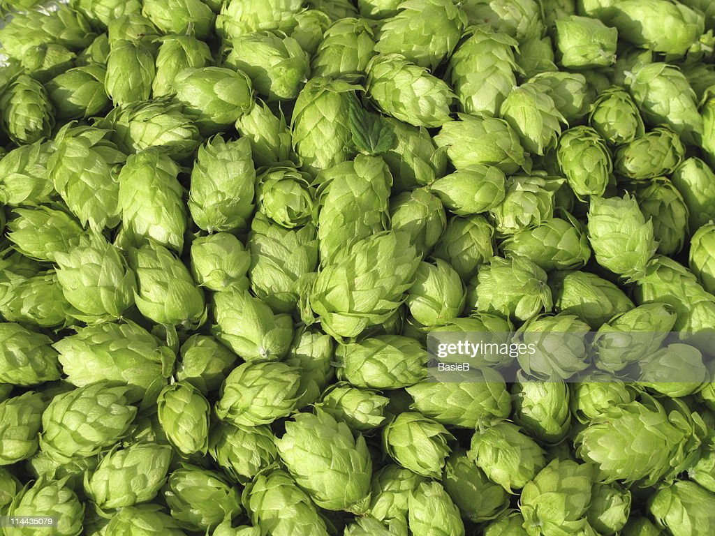 Green Hops Humulus Lupulus Stock Photo Getty Images