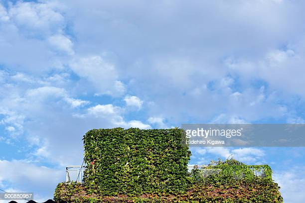 Green house and blue sky
