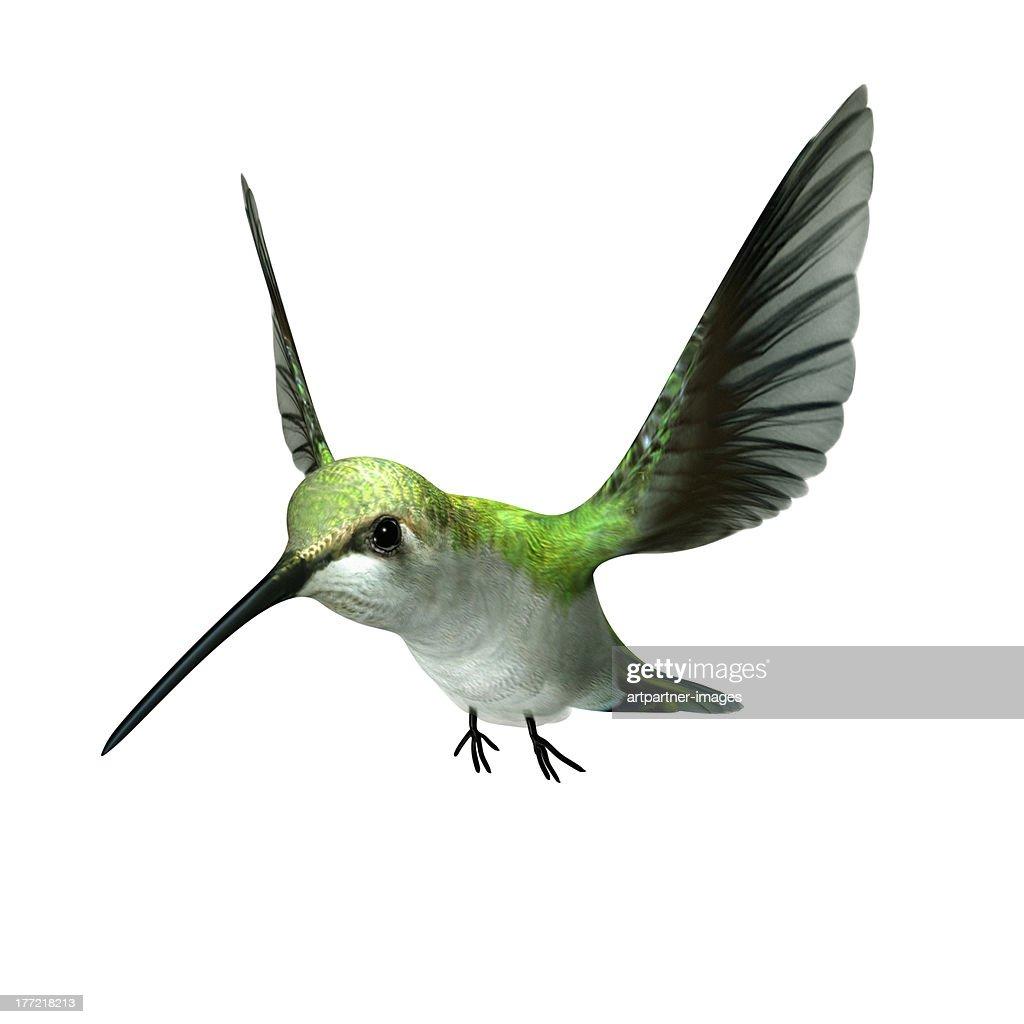 A green hummingbird flying on white : Stock-Foto