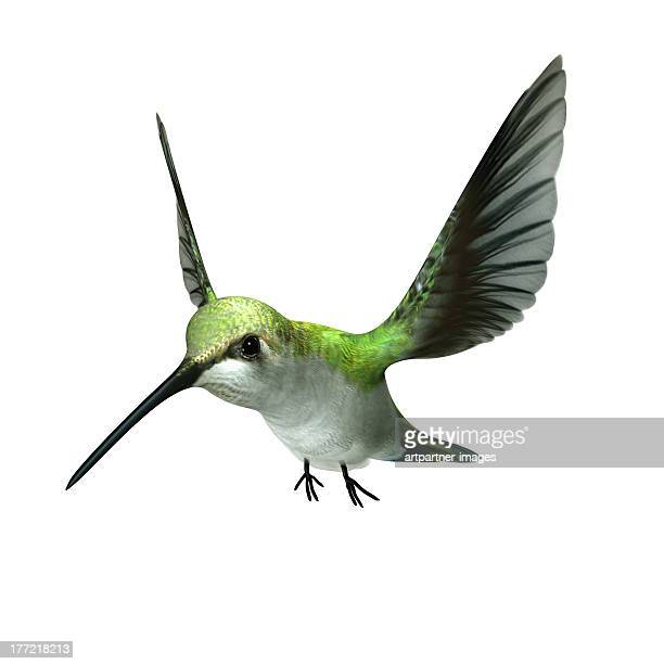 A green hummingbird flying on white