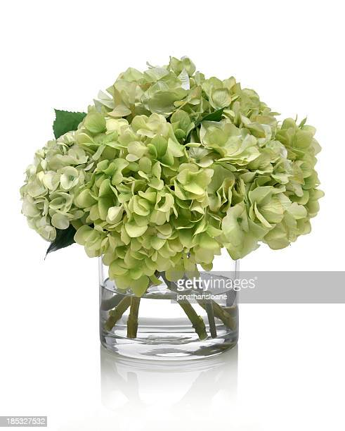 Green Hydrangea Bouquet on white background