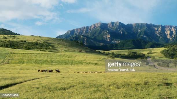Green idyllic pasture in Greater Caucasus mountains, Azerbaijan