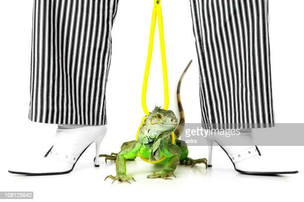 Green Iguna on Leash Between Striped Trouser Legs and Boots