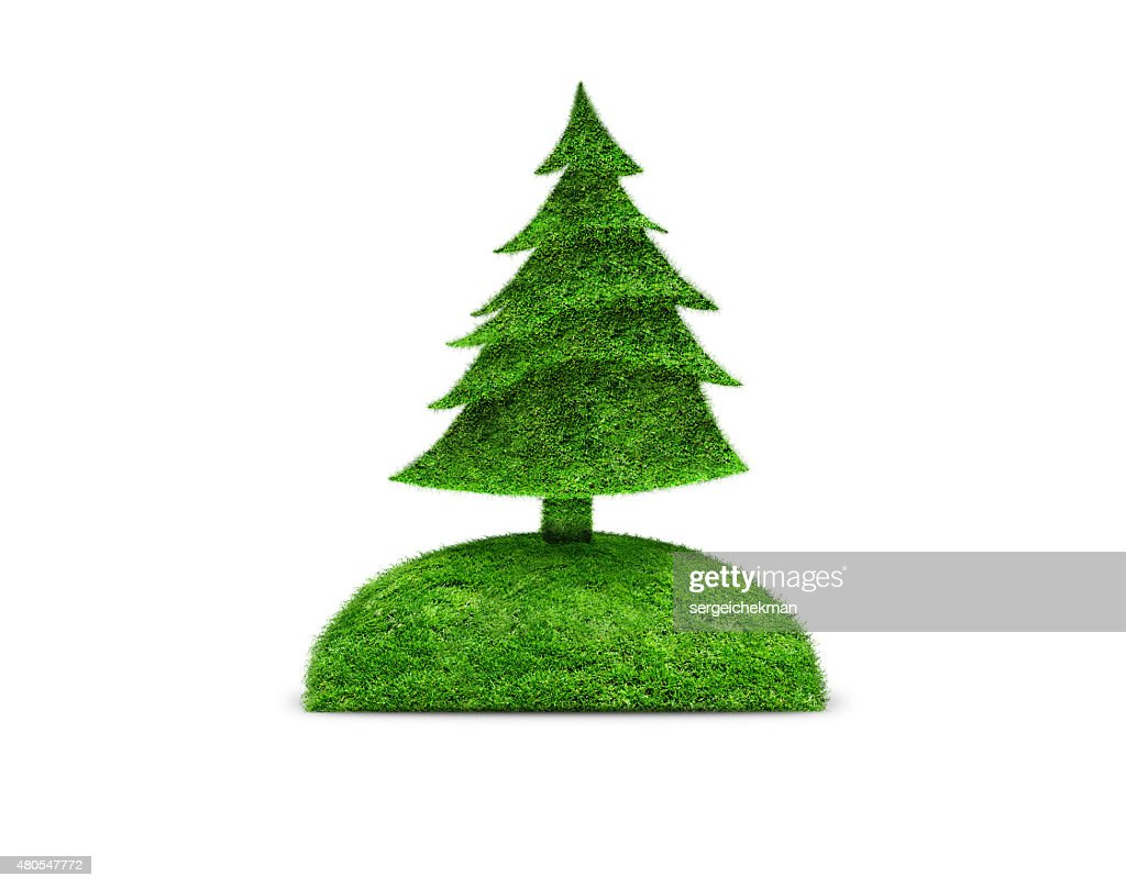 Green isolated fir tree : Stock Photo