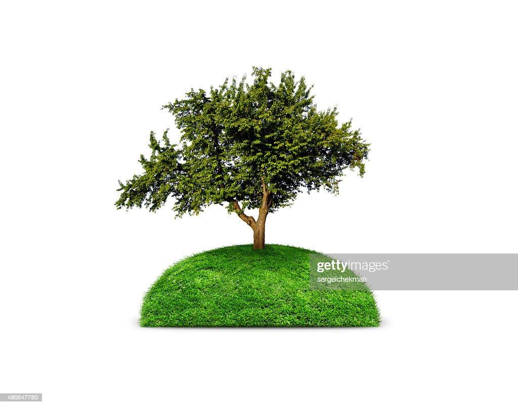 Verde Árvore isolada : Foto de stock